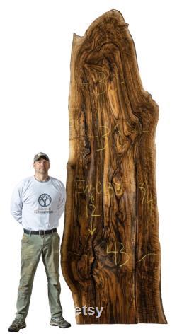 12 pieds Long Curly Anglais Noyer Live Edge Dalle. D énormes dalles de bois de noyer à vendre.