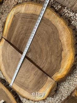 Amazing HUGE demi-tranche d arbre, (ONE) Black Walnut Live Edge Tree Section, Tabletop artistique, Wedding Cake Base J-R
