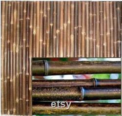 BLACK Bamboo Poles- Environ 6 pi Tall- 1 2 et 3 Diamètres- 10 Pack Ou 20 Pack