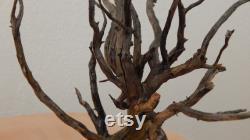 Branchement décoratif naturellement séché, Cedrus de montagne, cèdre, bois naturel
