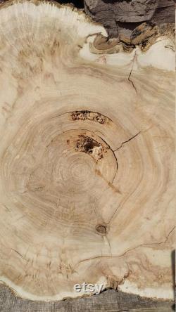 Dalle de Burl, bois d érable de dalle, dalle d érable, dalle de bois, dalle de table 24 18,5 2,3 pouces, 126