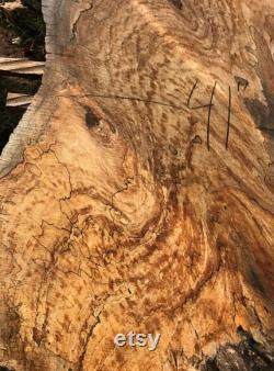 Dalle de bois d érable argenté spalted de 8 pieds. Table en dalle de bois de bord vivant. Dalles de bois à vendre. Table basse en dalle de bois. Bord vivant érable spalted