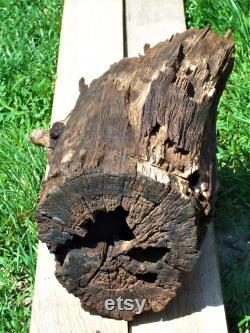 Driftwood Hollow Driftwood Home Décor Terrarium Décor