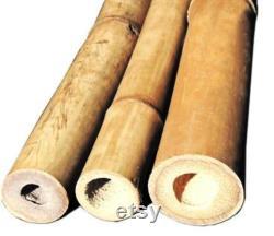 GRANDS pôles en bambou- 5 pieds de hauteur- Choix de 4 5 ou 6 de diamètre