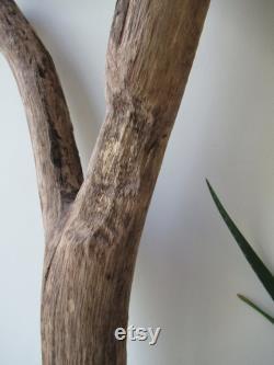 Lampe de plafond Driftwood Pendentif Lumière Grande Pièce de bois flotté Forked Drift Wood Branch Wall Hanging Driftwood Sculpture 4 pieds 122 cm