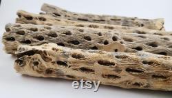 Macramé Cholla Gros Cactus Drift Wood Vente en gros Bulk Pack Kit 30 pièces Matières premières 16
