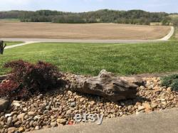 Ohio River Rustic Driftwood for Landscaping, Aquarium, or Taxidermy
