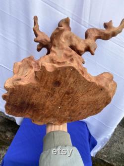 Pièces de bois flotté, planche de bois flotté, art du bois flotté, bois flotté, art mural en bois flotté, branche de bois flotté, sculptures en bois flotté