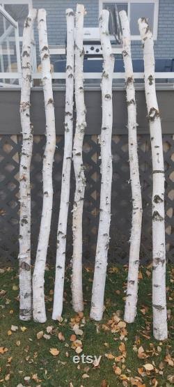 Poteaux de bouleau naturel fraîchement coupés Commande en vrac
