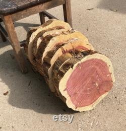 Rustic Cedar Wood Slabs, SET de 10, 10 11 x 2 d épaisseur, décor de mariage rustique, pièce maîtresse, monture de plantes, riser de plantes, étagère suspendue, BRICOLAGE
