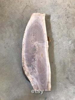 Tranche d arbre de noyer noir de 36 po