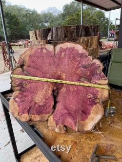 Tranche rustique d arbre, 20 24 x 2 d épaisseur, pièce maîtresse, dessus de table de DIY, illustration en bois, cèdre rouge du Texas, tranche de bois de projet, grande dalle de cèdre