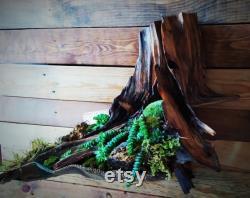 uvres d art racines vertes